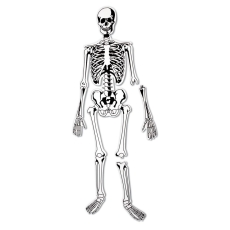 Dr. Bones - Puzzle de podea
